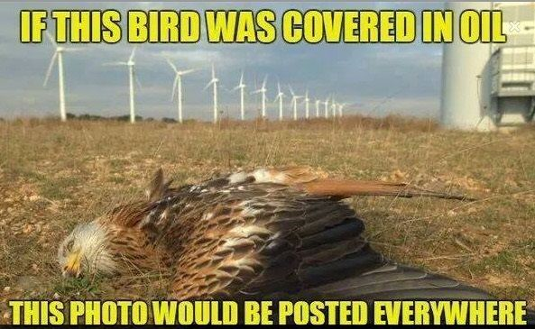 Bird killed by windfarms