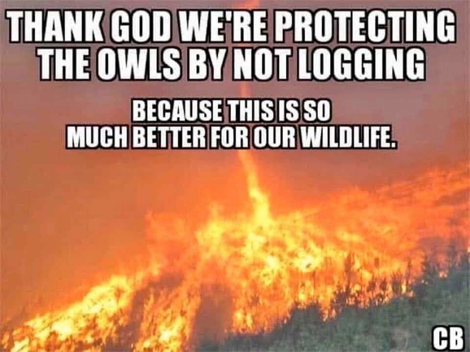 Owls logging